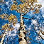 Aspen to Sky by Jamie Rood