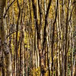Golden Grove by Jamie Rood