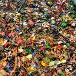 Leaves on the Ground by Jamie Rood