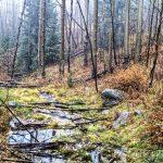 Misty Stream by Jamie Rood