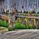 Dockside by Jamie Rood