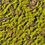 Mossy Rock by Jamie Rood