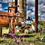 Tanks West of Eden - Purple Flowers Low by Jamie Rood